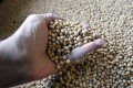 China imports nearly 100 million tonnes of soybeans a year, accounting for about 60 per cent of the world's market. Photo: AP