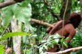 A glimpse of an uncontacted Amazonian tribesman, who has lived alone in the Amazon state of Rondinia for 22 years. The photo was provided by the Brazilian government indigenous agency Funai, which filmed the man from a distance. Photo: Funai