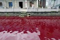 A contaminated river in Cangnan county, Zhejiang province in 2014. Photo: Reuters