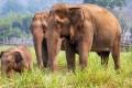 The Phuket Elephant Sanctuary rehabilitates Thai elephants from the animal entertainment industry. Model Kelly England Prehn visited the sanctuary on World Elephant Day.