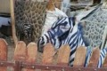 An Egyptian zoo has been caught allegedly attempting to fool visitors by painting black and white stripes on a donkey to make it look like a zebra.