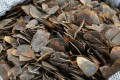 During a recent 10-week operation officials seized seven tonnes of pangolin scales hidden in cargo containers. Photo: K.Y. Cheng