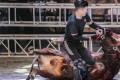 Bullfighter Ren Ruzhi fighting with a bull. Photo: Handout