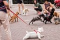 Dog lovers have voiced concerns about tougher rules on when and how they can walk their pets. Photo: Alamy