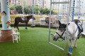 A merry-go-round using live ponies has been suspended at a shopping centre in China's southwestern Sichuan province following an online uproar over animal cruelty. Source: Thepaper.cn
