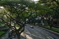FK1J06 Tree lined street, Singapore [09AUGUST2018 LIFE_SINGNATION] CREDIT: ALAMY