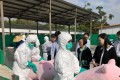 Agricultural officials conducting a swine fever culling drill using stuffed pigs, under the watchful eye of Secretary for Food and Health Sophia Chan Siu-chee. Photo: Facebook