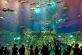 The Ocean Park is struggling to reinvent itself amid changing tourism trends. Photo: Xinhua