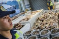 Endangered animal parts seized by Hong Kong customs in Kwai Chung. Photo: K. Y. Cheng
