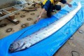 Oarfish usually inhabit deep waters and are rarely seen from the surface.