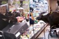 A group of stray bulls were filmed roaming through a ParknShop in Mui Wo, helping themselves to fruit displayed in cold storage units and shelves. Photo: Facebook