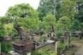 Bonsai trees in the garden of Fuyumi and Seiji Iimura. Photo: Bonsai Kirakuen