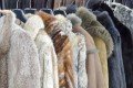 Coats made of animal fur line a store. Regrettably, you cannot always rely on the information on the tag cannot being accurate.