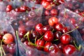 Cherries are an affordable luxury for China's middle class amid an economic downturn. Photo: Handout