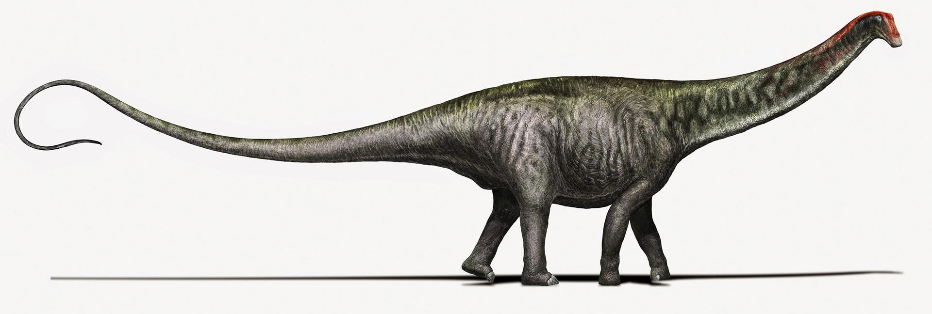 29f4e697f Brontosaurus is back: Beloved dinosaur deserves his old name, experts say |  South China Morning Post