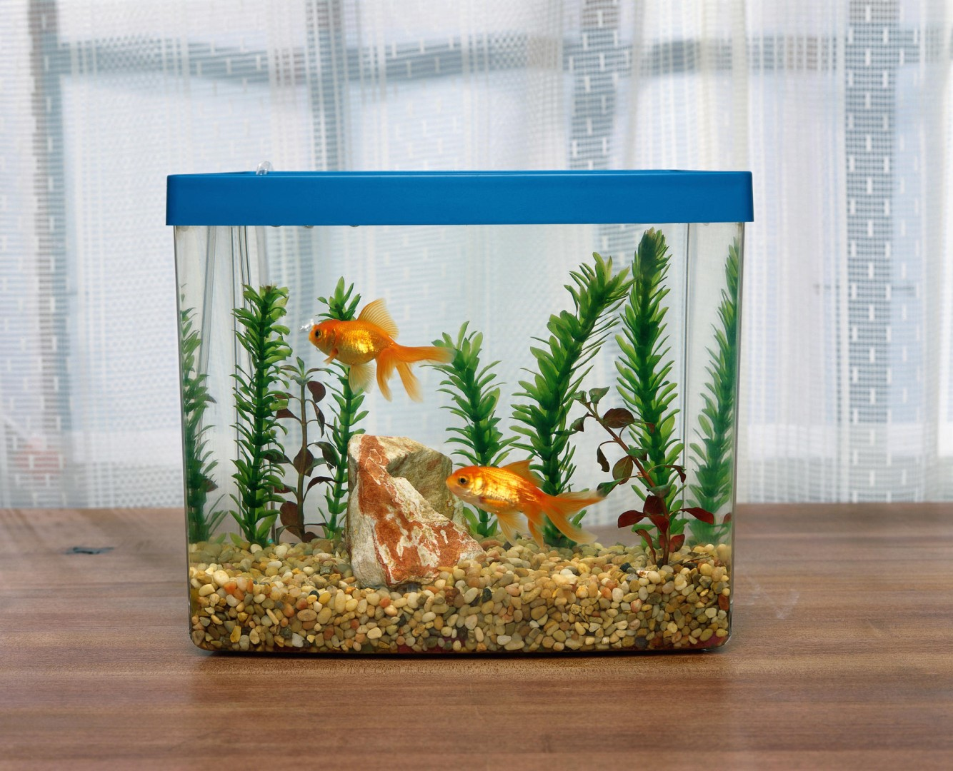 Fish-keeping - an easy, inexpensive, relaxing hobby | South China