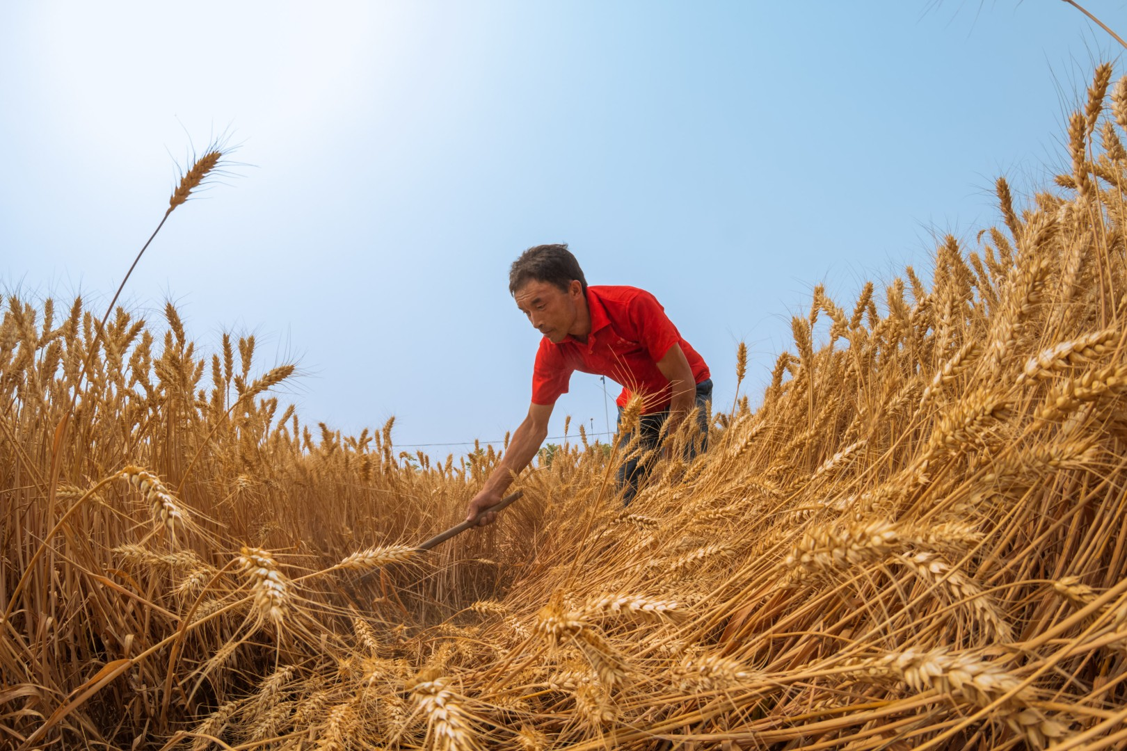 China producing more grain than ever, but imports and shortfall