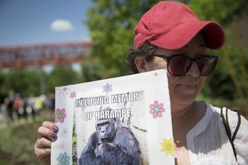 6c173658 Harambe lives, online: killed zoo gorilla gets a second life as an internet  meme | South China Morning Post