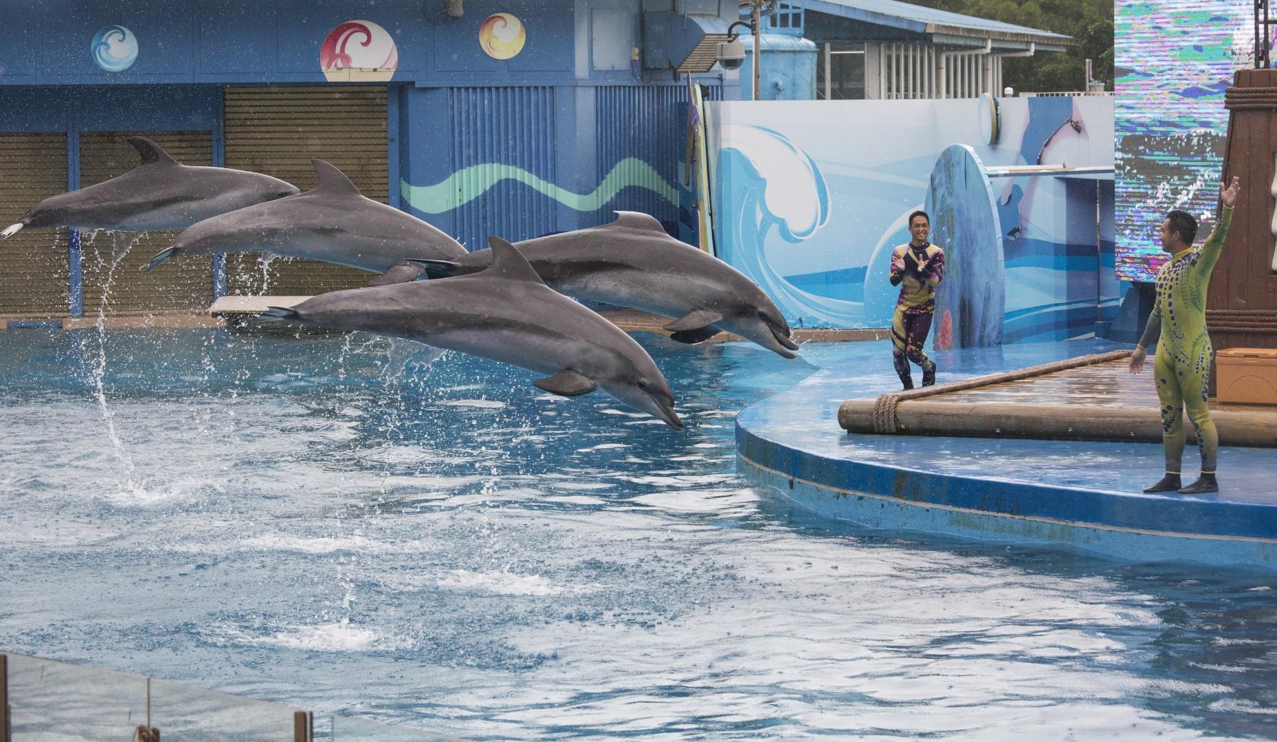 Dolphin dating sivusto