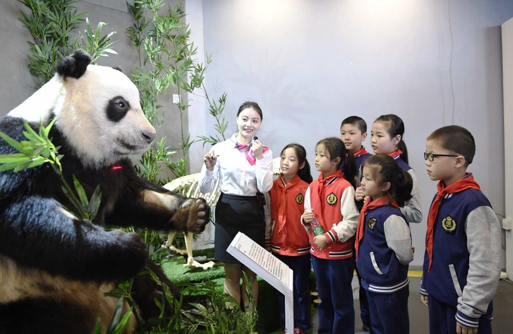 5044843ee142 Chinese museum unveils  world s first  plastinated giant panda ...