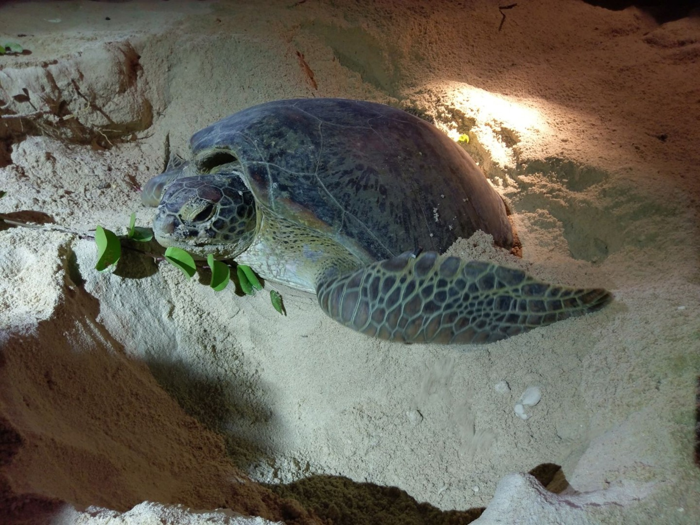 83b2f07fb9e90 Actors and activists fight for endangered green sea turtles  nesting site  in Hong Kong