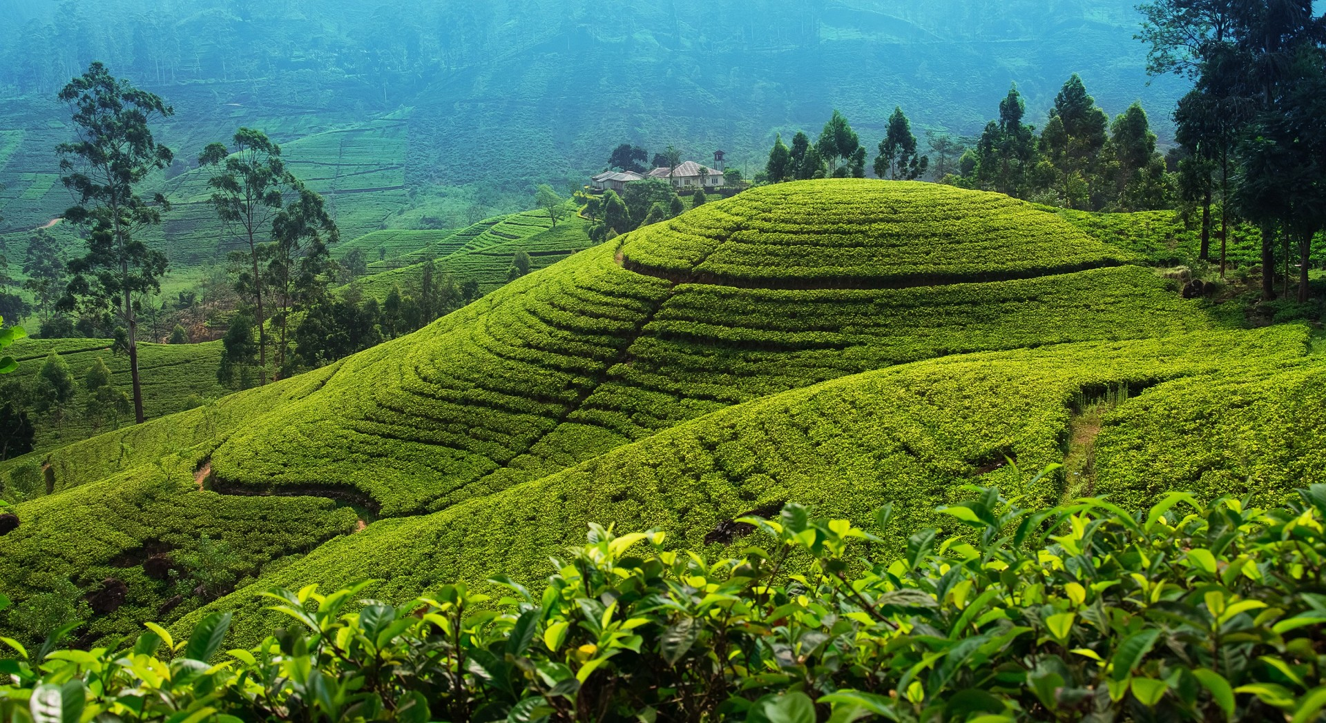 Sri Lanka's tea country: the good, bad and ugly sides to the
