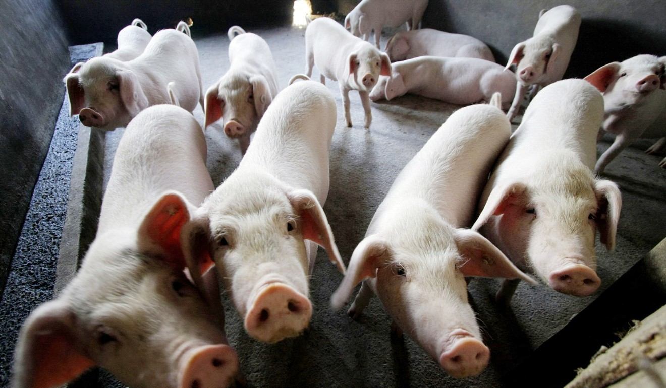 Hong Kong's pork prices likely to rise as pig supplies from
