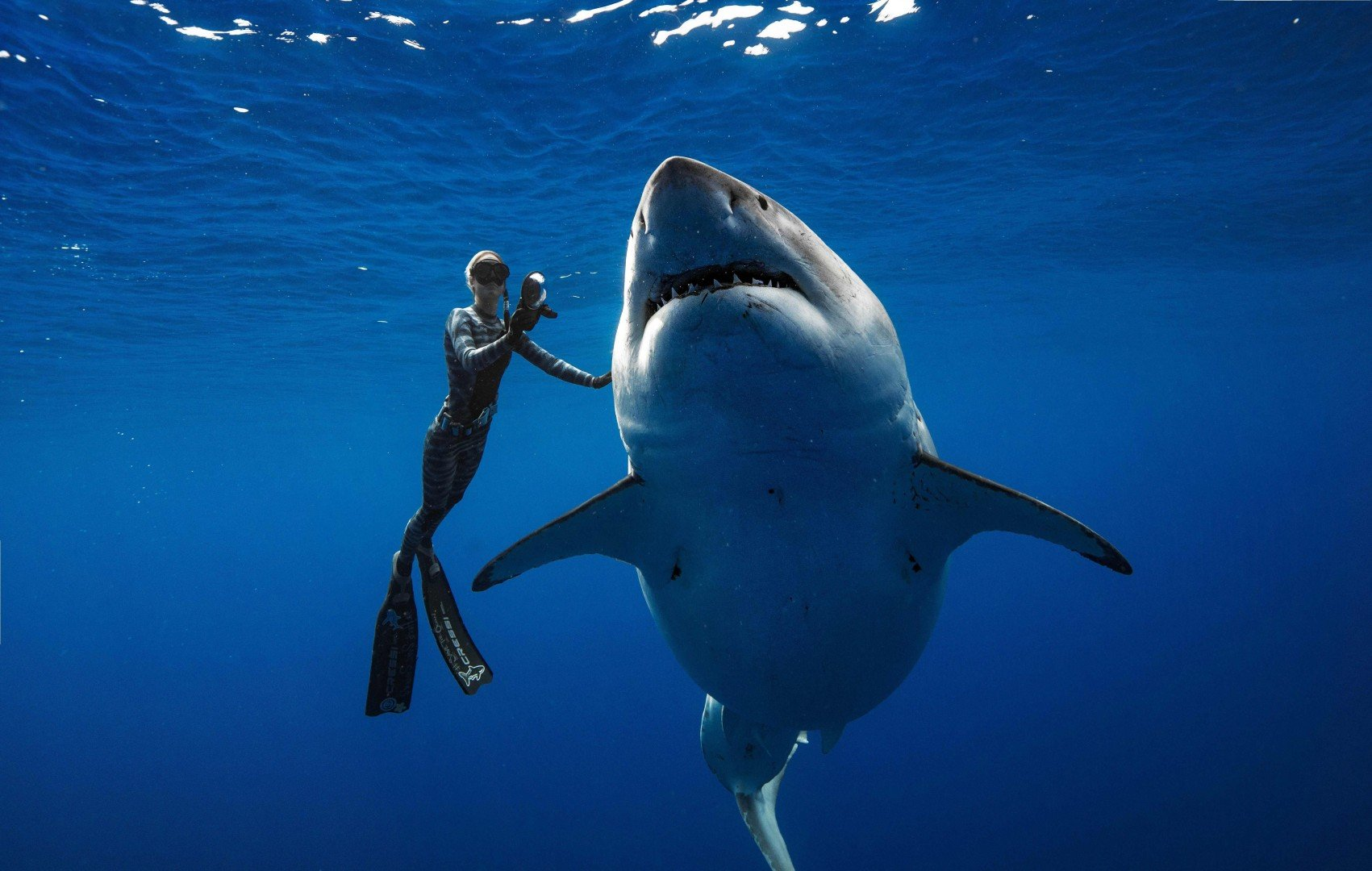 45ae1bad5c2e US divers spot 'one of the biggest ever' great white sharks off Hawaii  coast. '