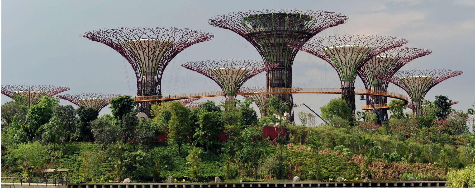 Supertree Grove in Singapore. Photo: AFP