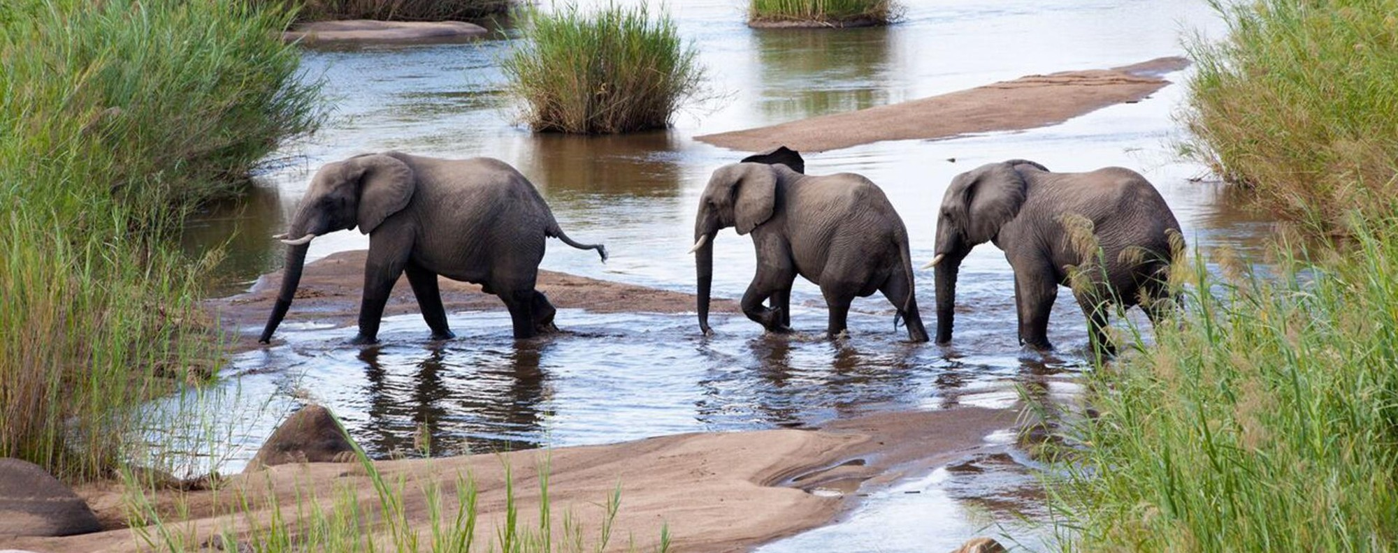 Young Elephants in the Maasai Mara, Kenya.