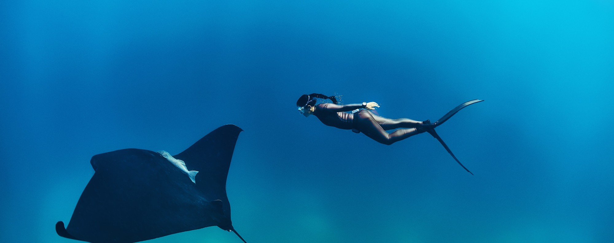 Free diver Hanli Prinsloo follows a manta ray. Photo: The Last Wilderness