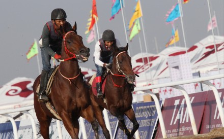 Flags fly as a couple of the entrants are given a workout at the Hohhot track ahead of the landmark race meeting. Photo: David Wong