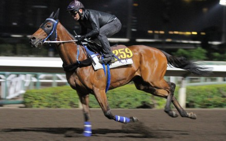 Despite his age, Lucky Nine is ready for his tiolt at Sunday's Hong Kong Sprint. Photos: Kenneth Chan