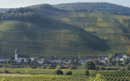 Vineyards in the Moselle Valley, in the Rhineland-Palatinate region of western Germany. Photo: Corbis
