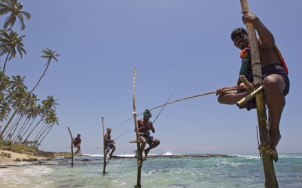 Stilt fishermen along the Galle coastline. Photo: Corbis