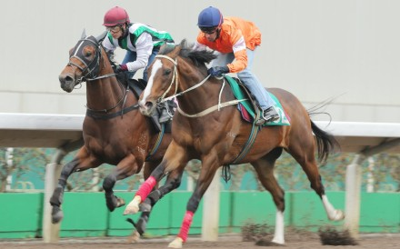 Blazing Speed (Neil Callan) edges out People's Knight (Terry Wong) to win a dirt trial as he prepares for the Hong Kong Gold Cup Sunday week. Photo: Kenneth Chan