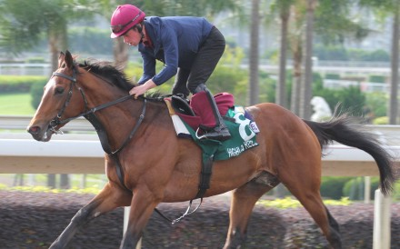 The Hong Kong Vase runner Highland Reel galloping on the all weather track at Sha Tin on 11Dec15.