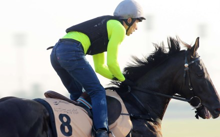 Master Kochanwong gallops on the Meydan track at Dubai on Friday. Photos: Kenneth Chan