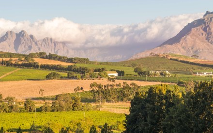 The wine-growing region of Stellenbosch, in South Africa.