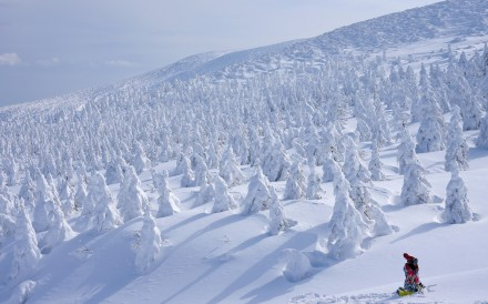 """""""Snow Monsters"""" on Mount Zao in Yamagata, Japan. Photo: Handout"""