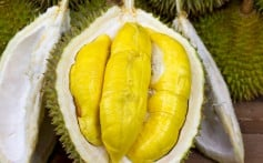 Durians are dirt cheap in Malaysia right now thanks to a bumper crop