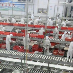 China food safety