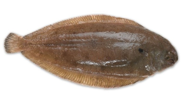 Sole survivor: UK paramedics save man after fish jumps down his throat. Fish not so lucky