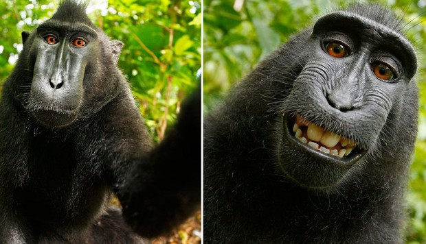 Can a monkey that took a selfie be named 'Person of the Year'?