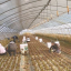Migrant workers at a lettuce farm in Buyeo, South Chungcheong Province. Photo: Korea Times file