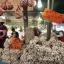 Garlic for sale at a market in Bang Khen.Photo: PATIPAT JANTHONG/Bangkok Post
