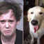 Jacob Bushkin and a photo of a golden retriever believed to be his service dog, Cub, that Bushkin once used as his Facebook profile photo. Photo: AP via Facebook