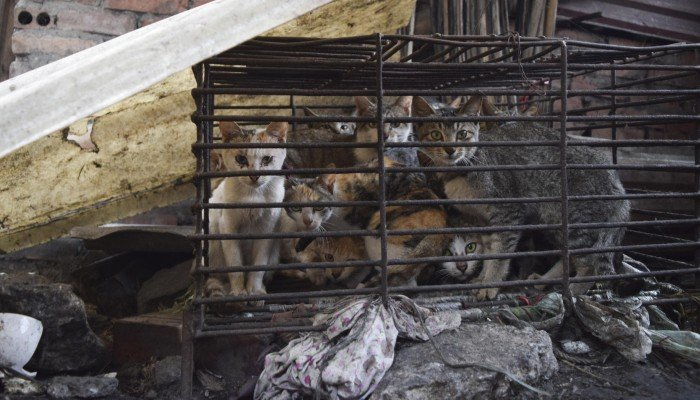 Cruel trade: the flourishing cat-meat restaurants of north Vietnam