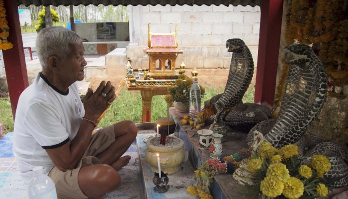 King cobras in Thailand: why some villagers worship the snake and