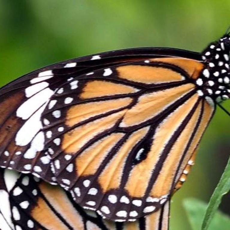 Final, sorry, asian butterfly reverse
